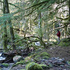 The trail ends at the edge of the East fork with a fire ring & a small camping area.