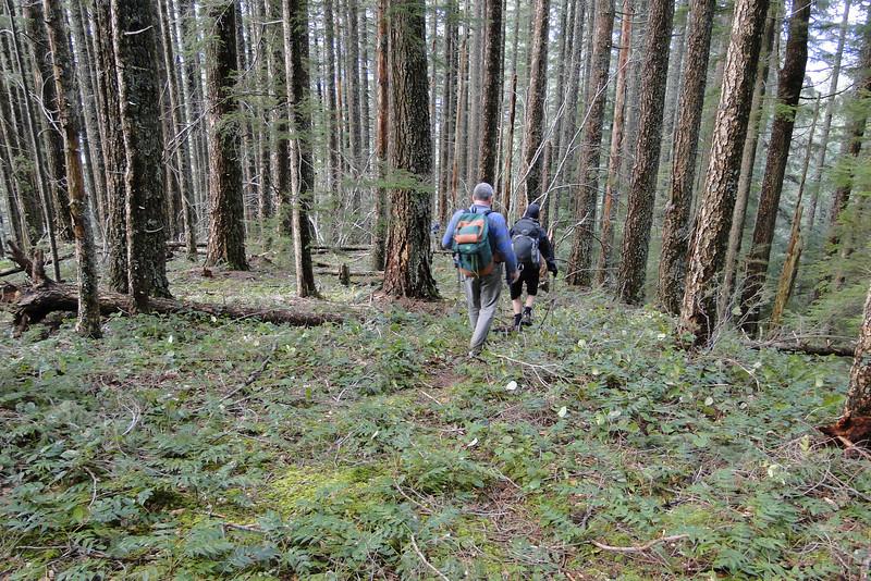 Off trail again & heading down Horsetail Ridge.