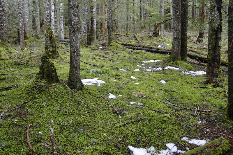 Area around the cabin.