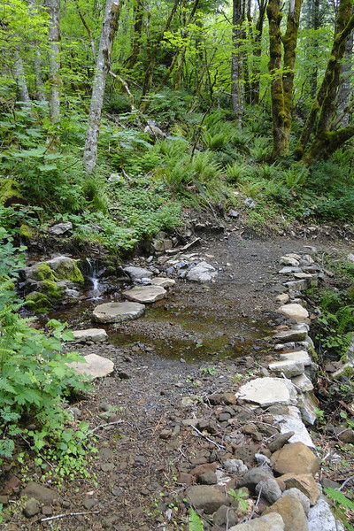 The new Bridal trail that connects the East side Hardy Ridge trail with the Hardy Creek crossing.