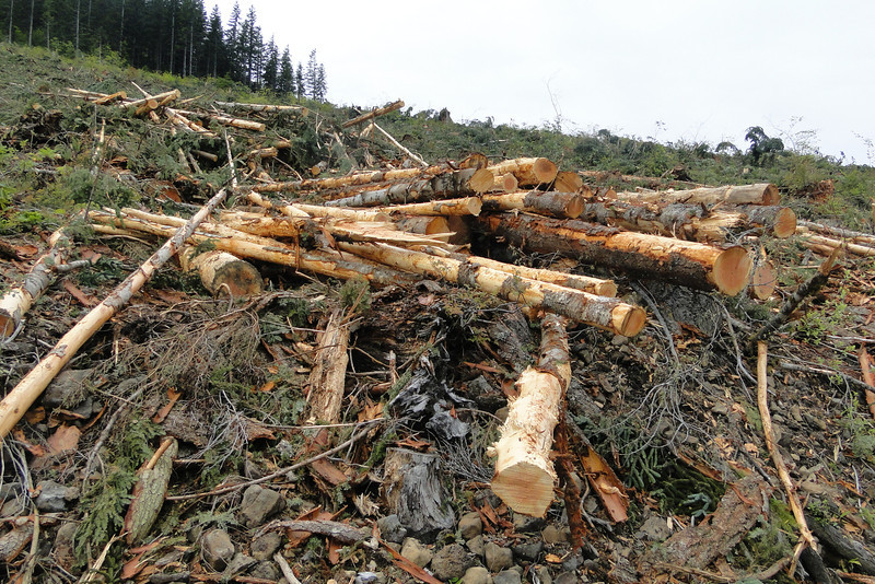 Logging just North of the Powerlines.