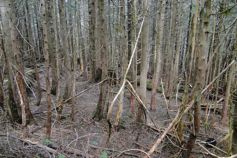 Dense woodland on the Northwest side of Phlox Point