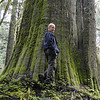 A Survivor!<br /> Don stands in front of a huge old growth Cedar that somehow escaped the fate of all it's neighbors 100 years ago or so.
