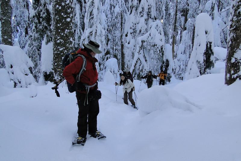 Larch Mountain Trail.