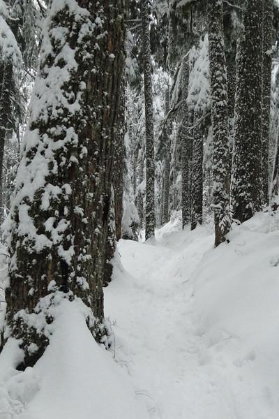 Deeper & deeper snow.