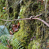 The old cable hand rail on the trail that lead to the bridge over Upper Latourell Falls.