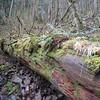 Trail to Upper Lattourell Falls <FONT SIZE=1>© Chiyoko Meacham</FONT>