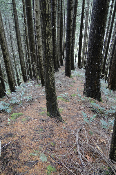 East Cedar Creek Ridge Trail.