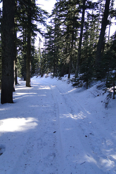 Crossing the Summit Road.