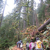 Larch Mountain Trail. <FONT SIZE=1>© Chiyoko Meacham</FONT>