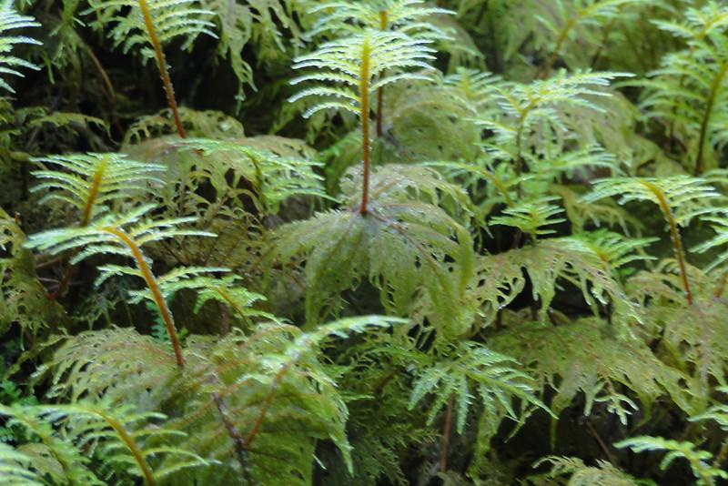 A Moss Forest!
