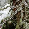 Icy Huckleberries