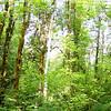 Tanner Creek Trail.
