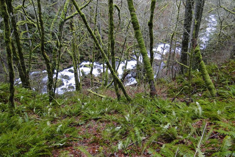 Looking down on Bridal Veil Creek.