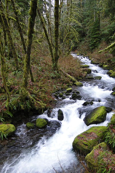 Bridal Veil Creek at the Bower Road Bridge.
