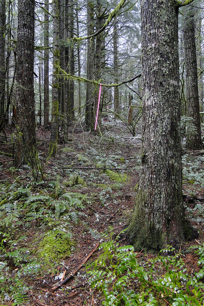 A well flagged side trail, we did not have time to investigate on this trip.