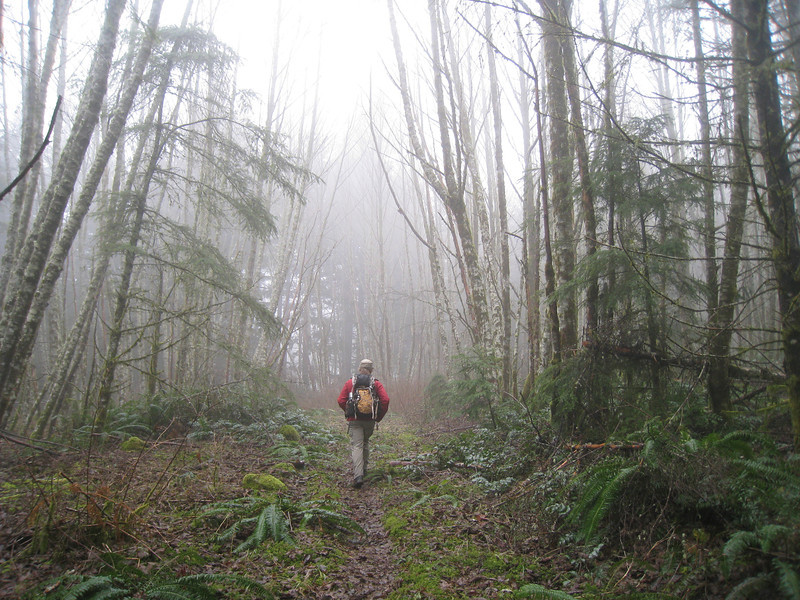 Heading up the first old forest road that intersects Palmer Mill after the gate. <FONT SIZE=1>© Chiyoko Meacham</FONT>