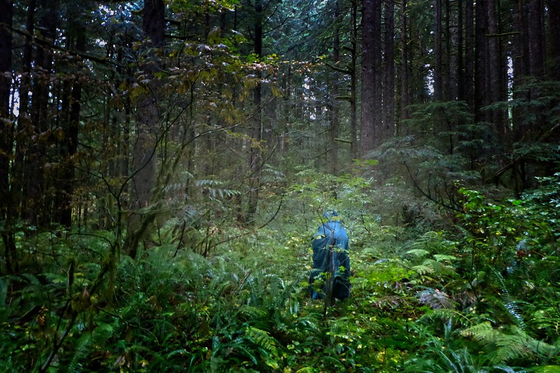 Forest Bathing!