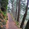 Trail 400 <FONT SIZE=1>© Chiyoko Meacham</FONT>