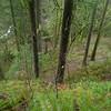 Trail 424