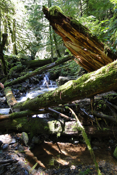 The Upper Crossing of the West Fork of Duncan Creek.