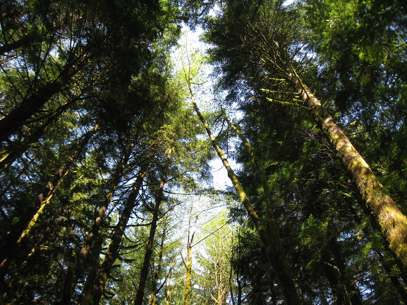 Travelling up the West side of Duncan Creek. <FONT SIZE=1>© Chiyoko Meacham</FONT>