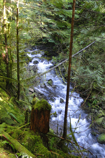 Travelling up the West side of Duncan Creek.