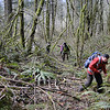 The first three quarters of a mile of the trail remain covered in a branches that the forest service threw over the trail to discourage it's use but they do not cause that much of a problem.