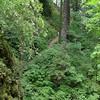 Above Ponytail Falls.