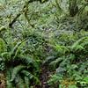 Rudolph Spur Trail.