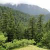 Ruckel Creek Trail.
