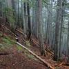 Rudolph Spur Trail.<br /> A bit lost!