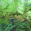 Russ Jolley Trail.<br /> Jurassic Wonderland!