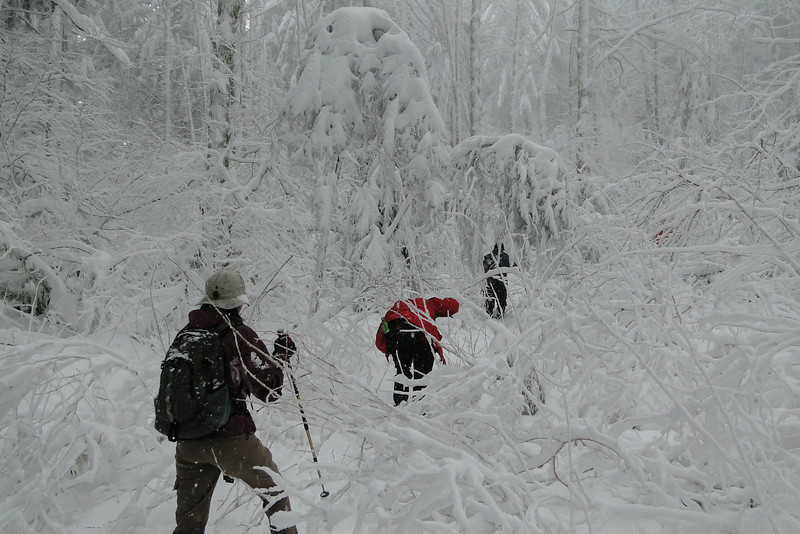 Archer Mt. Road
