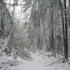 Archer Mt. Road <FONT SIZE=1>© Chiyoko Meacham</FONT>