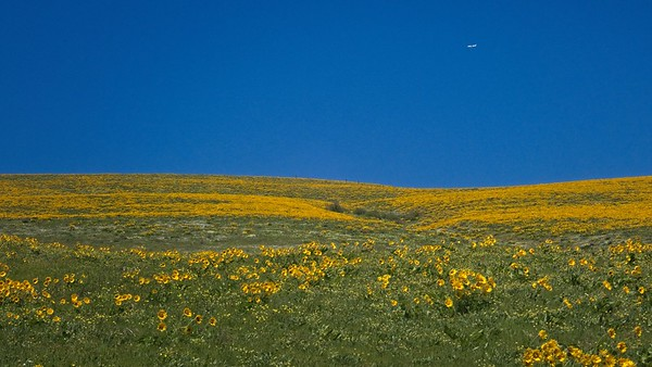 Sevenmile Hill © Chiyoko Meacham