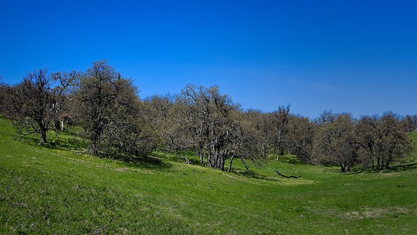Seven Mile Hill