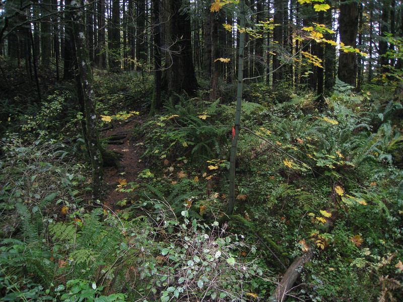 The point were the short woodland connector trail connects the power line & old logging roads. <FONT SIZE=1>© Chiyoko Meacham</FONT>