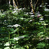 Cook Hill trail.<br /> The Hog Weed Forest