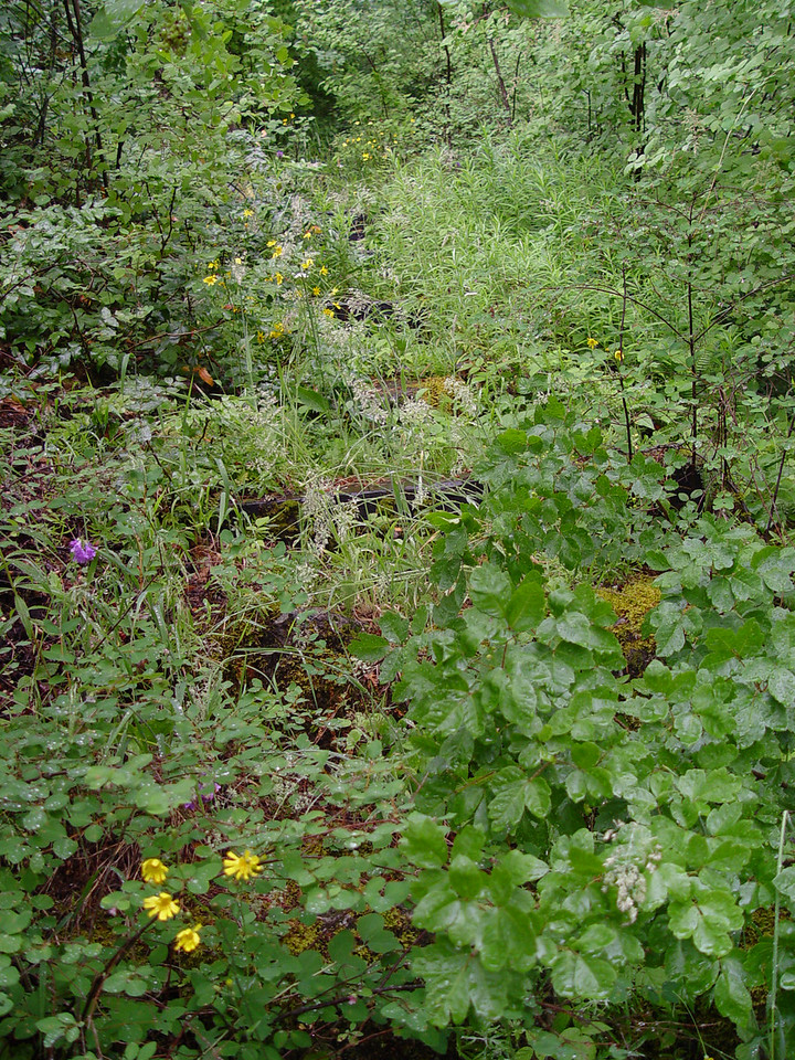 The old railroad tie stairs are still in pretty good shape under the wildflowers. Some of them still had anti slip rubber tread on them!
