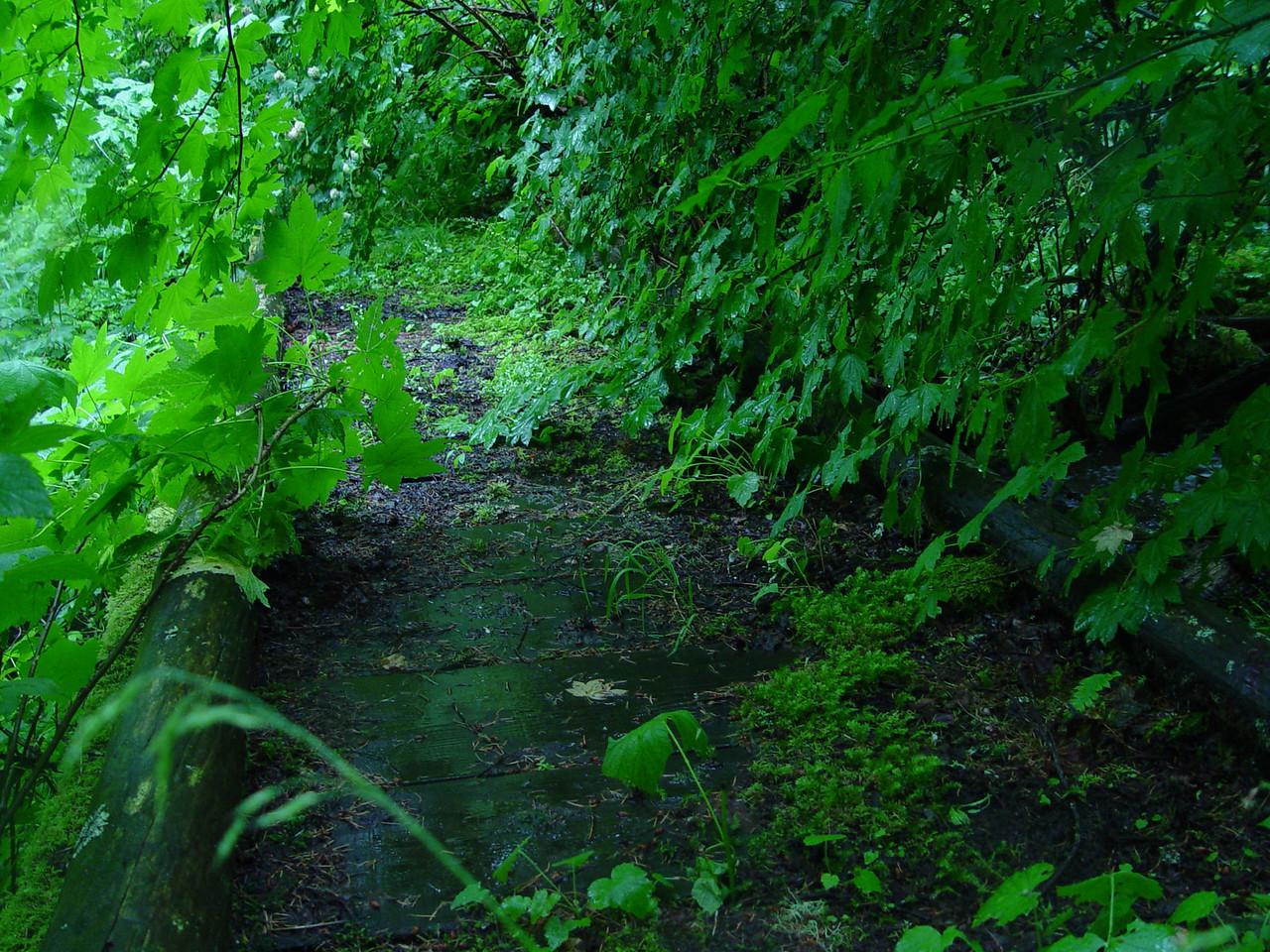 The Shady Creek footbridge was still in very good condition.