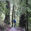 I never get tired of the Eagle Creek Trail. <FONT SIZE=1>© Chiyoko Meacham</FONT>