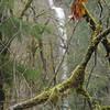 First View of Tish Creek Falls through the brush!