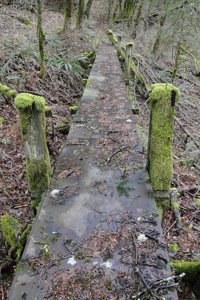 The 400 Trail near the Wahclella Trailhead.
