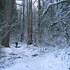 Wahkeena Trail <FONT SIZE=1>© Chiyoko Meacham</FONT>