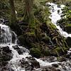 Confluence of the Wahkeena Creek & the Creek below Fairy Falls