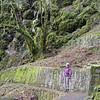 Wahkeena Trail