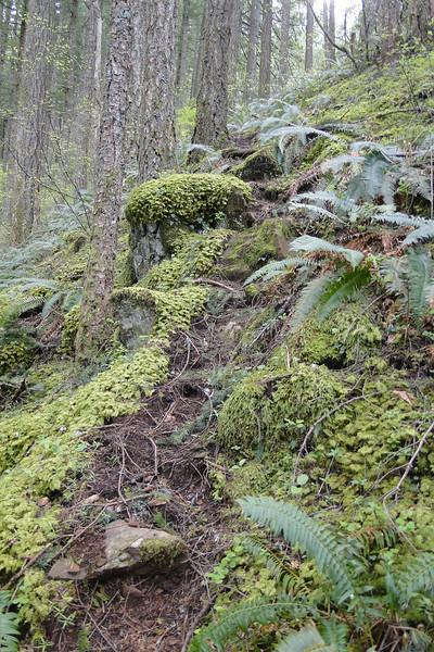 Heading up Waespe Ridge to the Bickel Overlook.