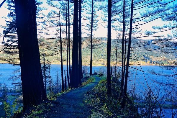 Multnomah - Wahkeena - Devils Loop © Chiyoko Meacham