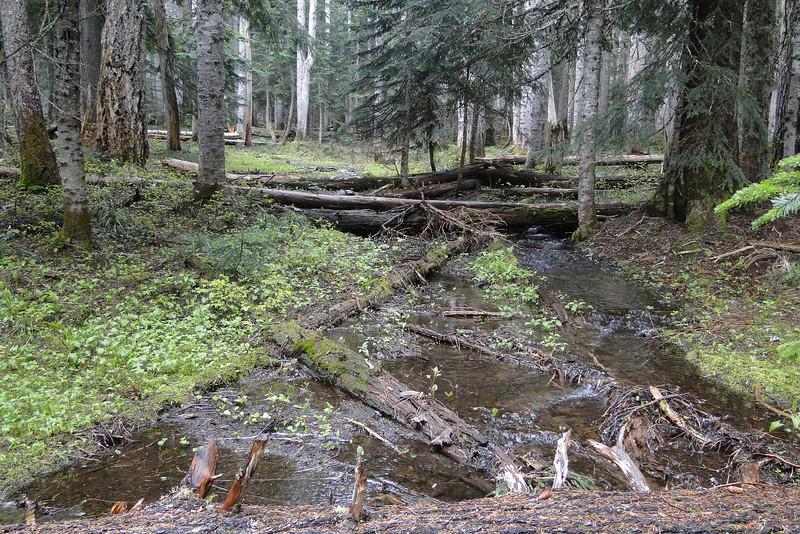 Headwaters of Gorton Creek